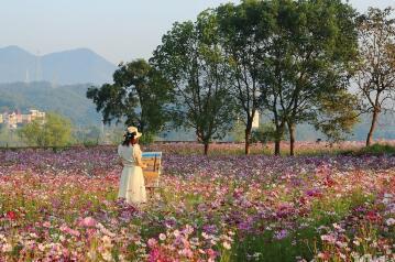 浙江的农村,确实很美丽